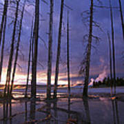 Dead Trees In Lower Geyser Basin Poster