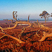 Dead Trees, Southern Uplands Poster