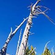 Dead White Trees Poster