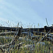 Deadfall And Grasses And Brushed Blue Skies Poster