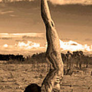 Death Of A Yogi Poster