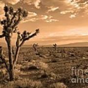 Death Valley Solitude Poster