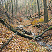 Deciduous Forest With Ravines Poster