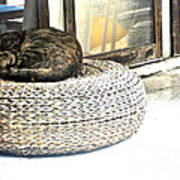 Deck Cat Poster