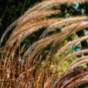 Decorative Grass Wind Autumn And Orton Poster