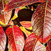 Deep Into Autumn Poster