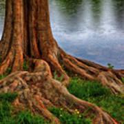 Deep Roots - Tree On North Carolina Lake Poster by Dan Carmichael
