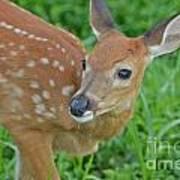 Deer 21 Poster