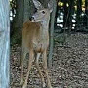 Deer 3 Poster