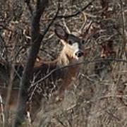 Deer Ahead Poster