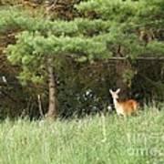 Deer At Dusk V1 Poster