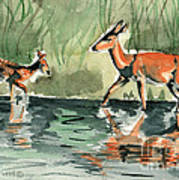 Deer At The River Poster