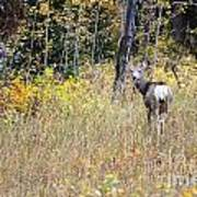 Deer Camoflauged Poster