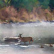 Deer Crossing Stream Panoramic Poster