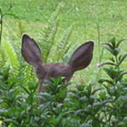 Deer Ear In A Mint Patch Poster