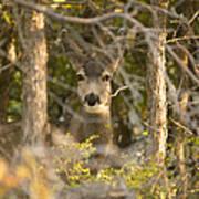 Deer Frame Poster
