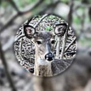 Deer Hunter's View Poster