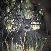 Deer II Poster