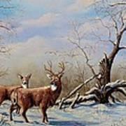 Deer In Crete Poster