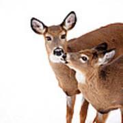 Deer Kisses Poster