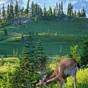 Deer Mountain Poster