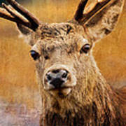 Deer On Canvas Poster