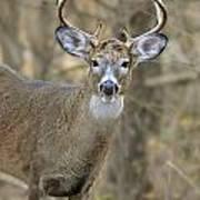 Deer Pictures 445 Poster