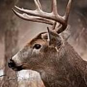 Deer Pictures 491 Poster