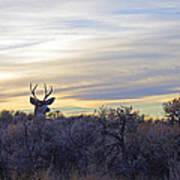 Deer Ridge - Sunset Buck Poster