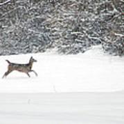 Deer Running Poster