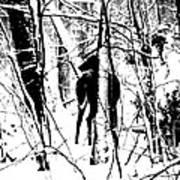 Deer Shadow Poster