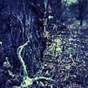 Deer Skull In Forest Poster