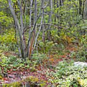 Deer Trail Early Autumn Pocono Mountains Pennsylvania Poster