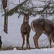 Deer With A Leg Up Poster