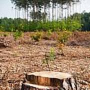 Woods Logging One Stump After Deforestation  Poster