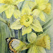 Delias Mysis Union Jack Butterfly On Daffodils Poster