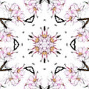 Delicate Cherry Blossom Fractal Kaleidoscope Poster