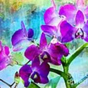 Delicate Orchids Poster