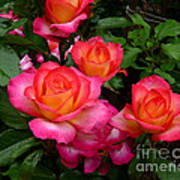 Delicious Summer Roses Poster