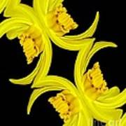 Delightful Daffodil Abstract Poster