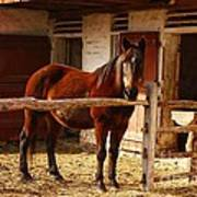 Delightful Horse Poster