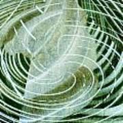 Delightful Swirl Poster