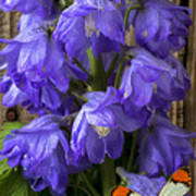 Delphinium And Butterfly Poster