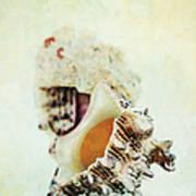 Delphinula Sea Shell Poster