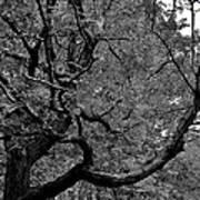 Denver Tree Fx Poster