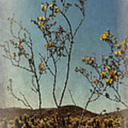 Desert Bloom Poster