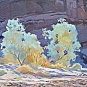 Desert Contrasts Poster