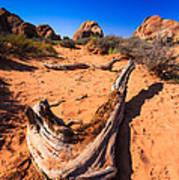 Desert Driftwood Poster