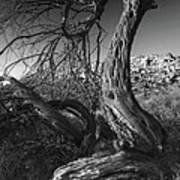 Desert Elder Poster