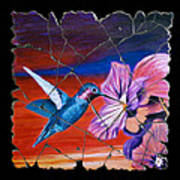 Desert Hummingbird Poster
